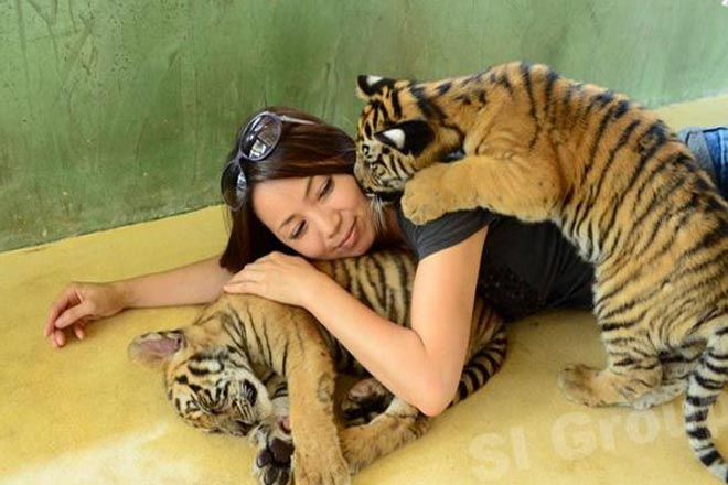 Phuket Island Tour + Tiger Kingdom