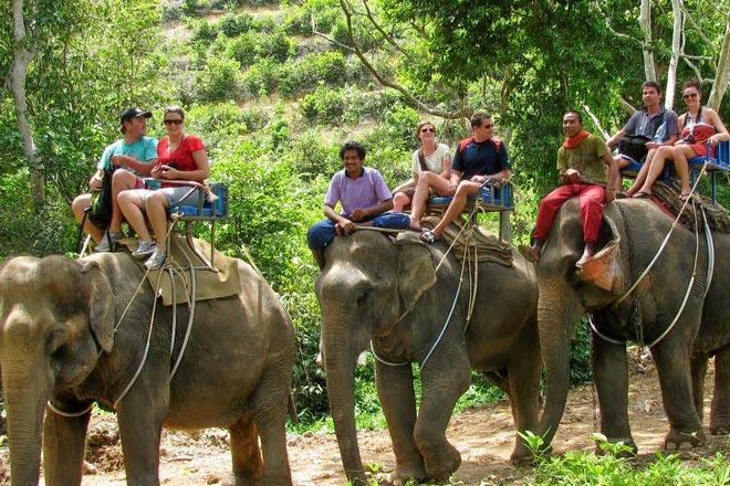 Phuket Sightseeing & Elephant Safari Tour